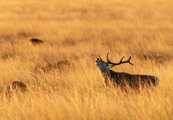In Long Grass by Trevhas