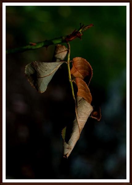 Autumn curls. by Mollycat