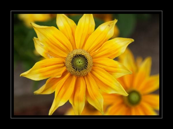Autumn flower. by wentnorth