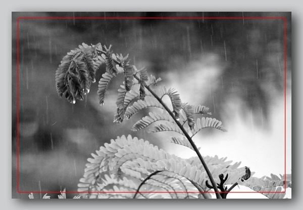 *** Raindrops *** by Spkr51