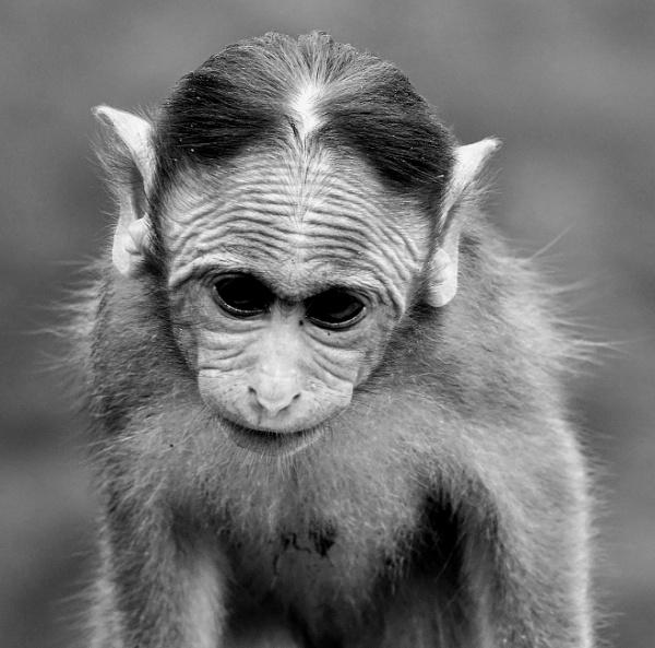 *** Monkey Infant *** by Spkr51