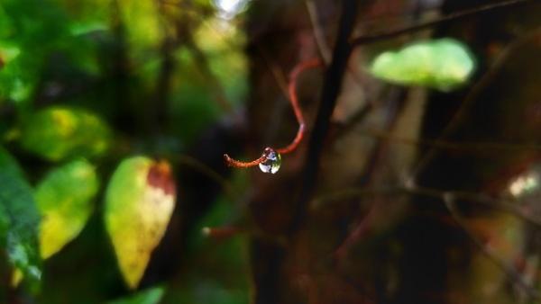 Raindrop by gypsylenz