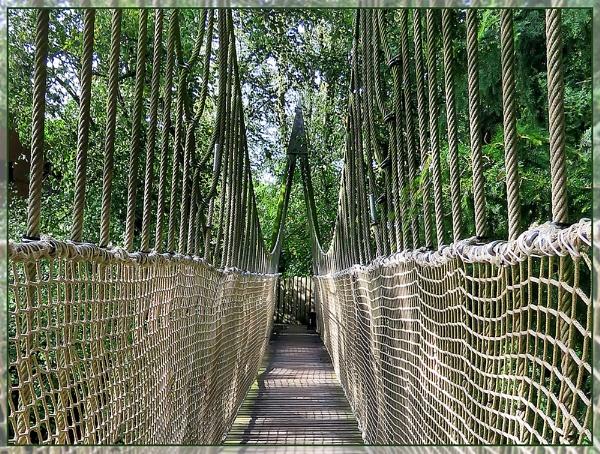 Rope Bridge by Sylviwhalley