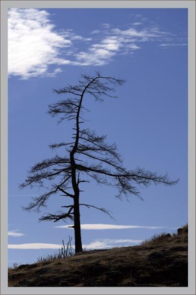 Lone Tree by prabhusinha