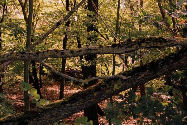 woodland scene by charliejohn