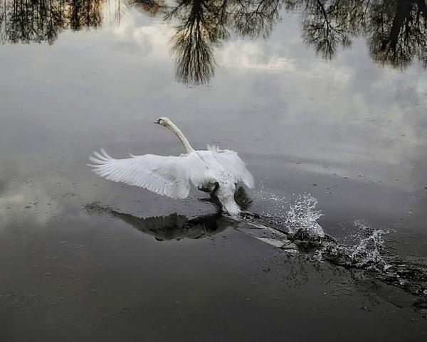Broken Ice by sweetpea62