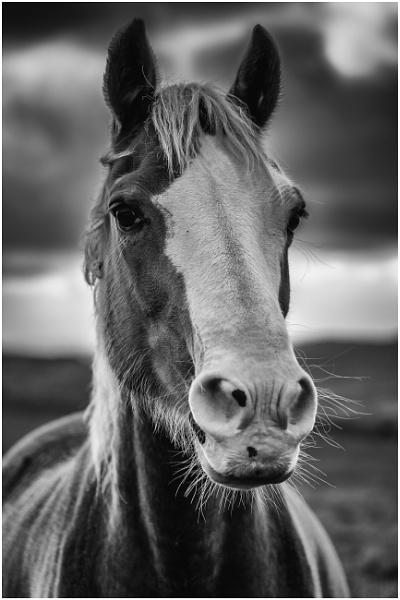 Pony by daibev