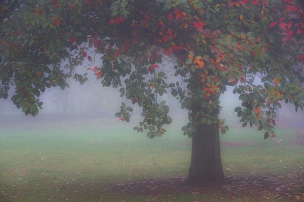 Autumn Mist. by 2479