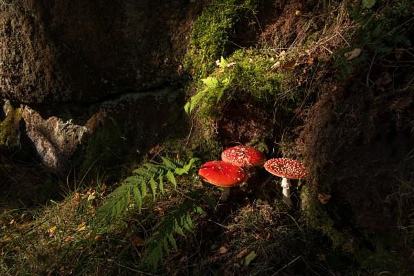 Autumn\'s Larder by Trevhas