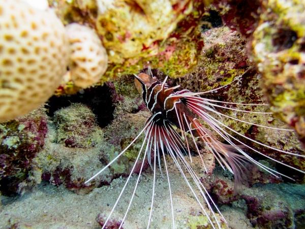 Under the Red Sea by rninov