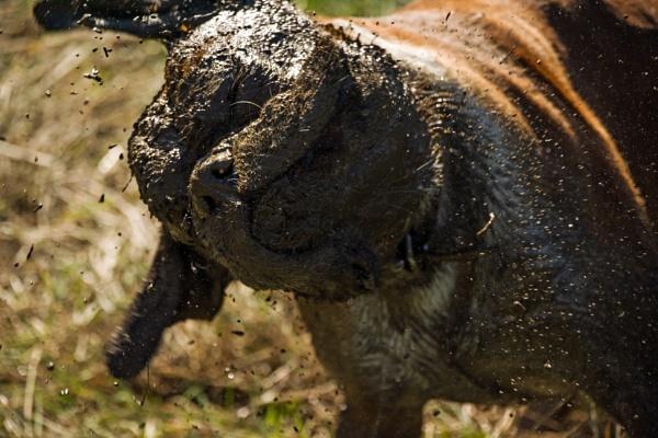 Muddy shake by Madoldie