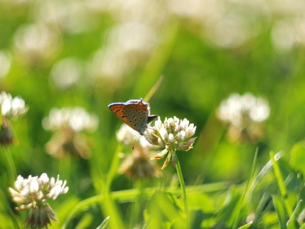 Natural Wanderer by MUSTDOS