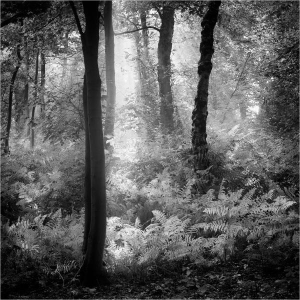 Woodland light by fredsphotos