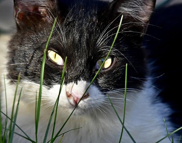 cat\'s eyes by Savvas511