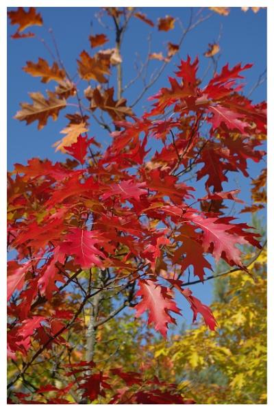 Autumnal Gleam Series #95 by PentaxBro