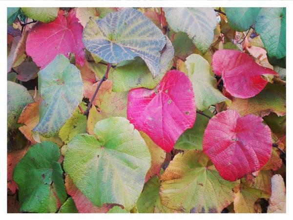 Autumnal Gleam Series #92 by PentaxBro
