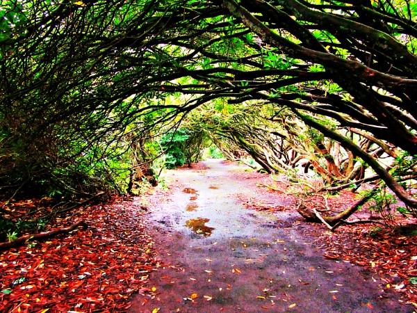 Autumn Days by nemasi