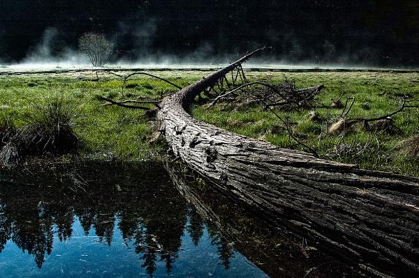Misty Tree by Zydeco_Joe