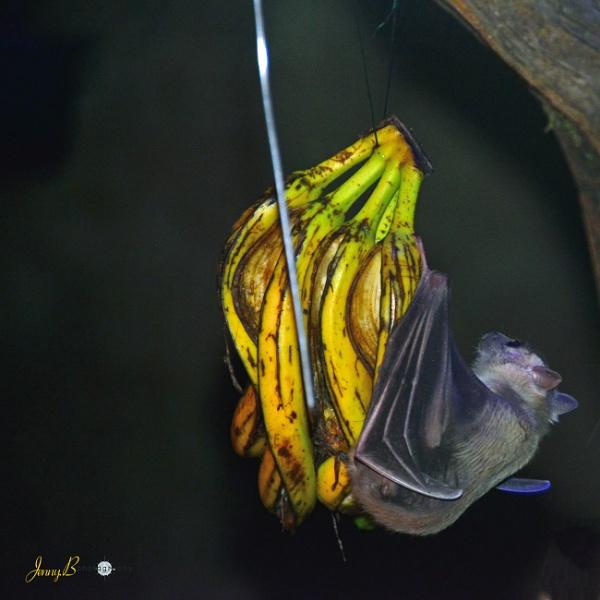 Going Batty by jb_127
