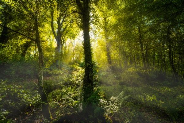 Autumn Woods by douglasR