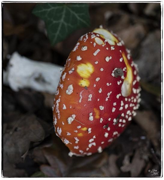 Fungi With My Fun Guy 2 by LynneJoyce
