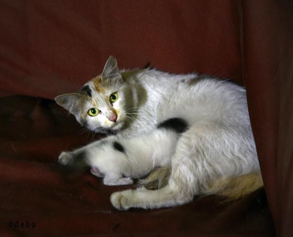 Mom Cat Loves Her Baby by debu