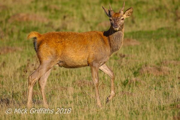Hello Deer by Bazzaspal