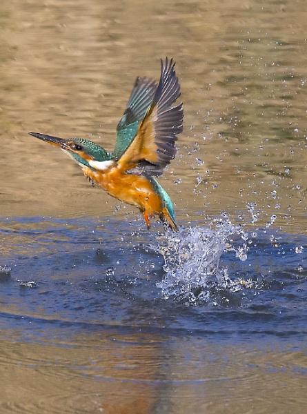 splash by bigjim147
