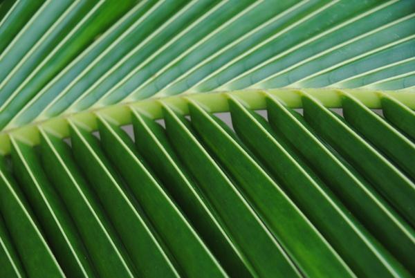 A green dream... by Chinga
