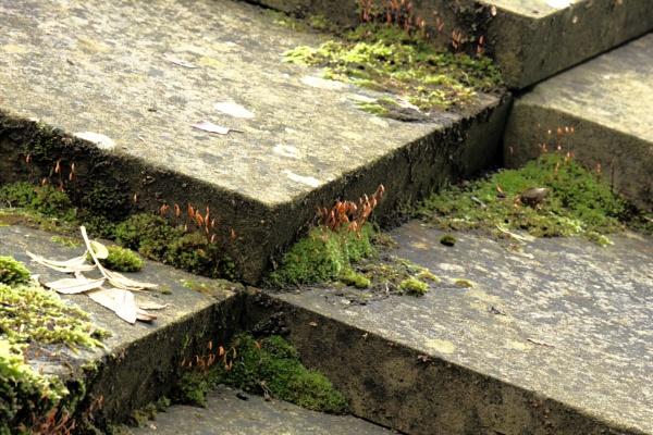 Roof garden by ScottishHaggis