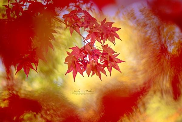 Autumn Fire by jackyp