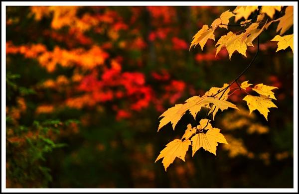 Autumn colours by djh698