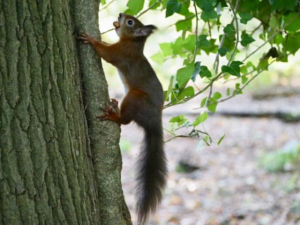 Nuts by caj26