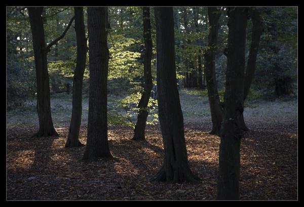 Enchanted Wood by BobDraper