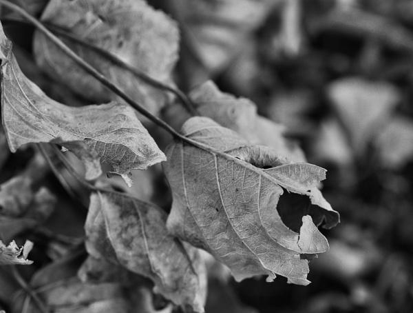 Fallen Leaves by DaveRyder