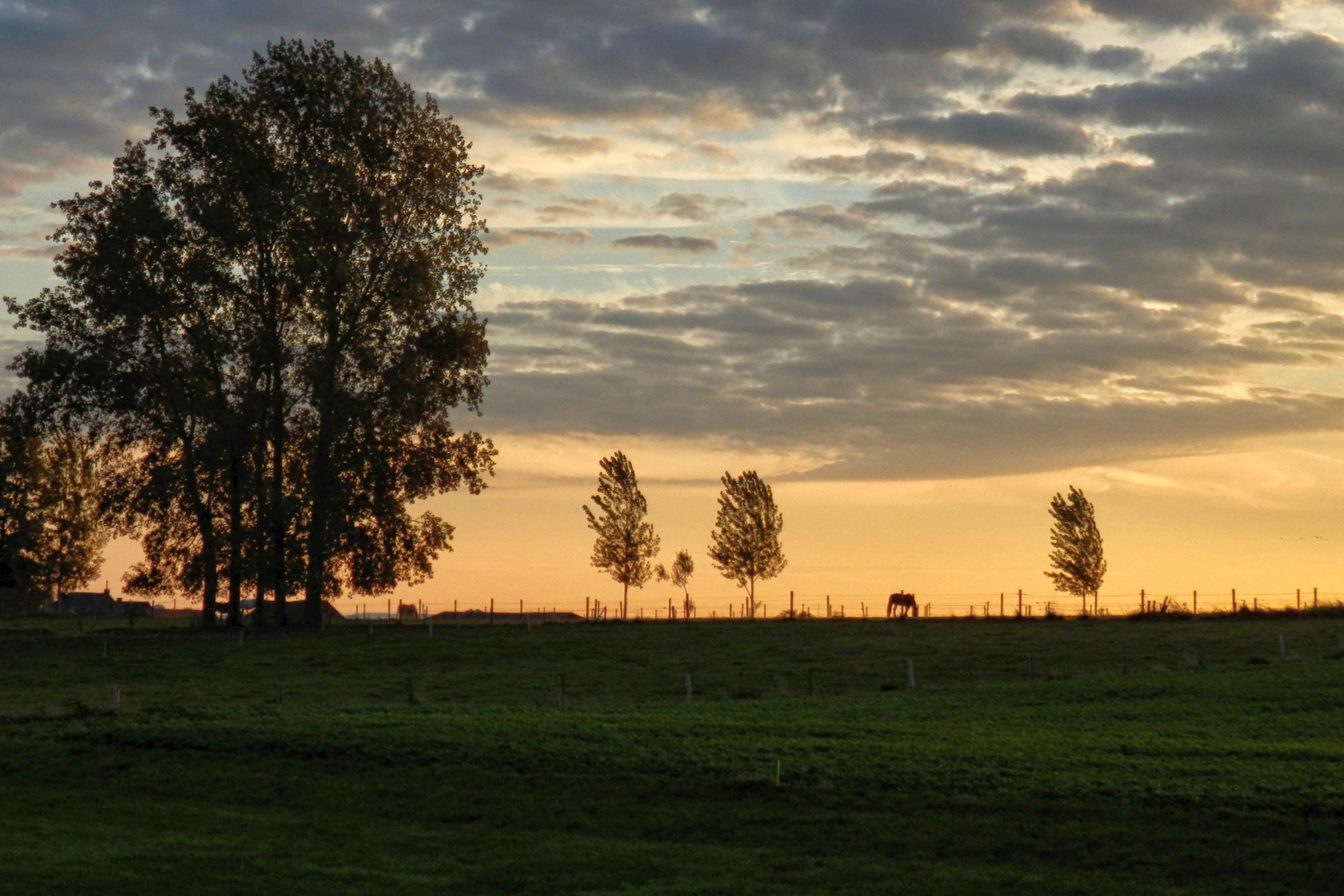 Countryside At Dawn