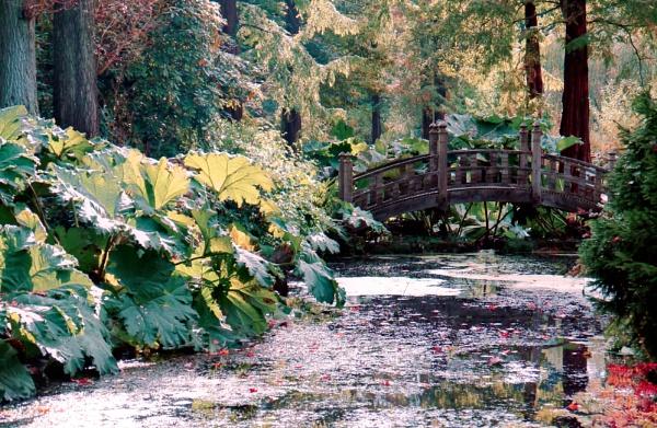 Autumn At Winterbourne.