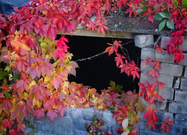 Autumn colors by Kabrielle
