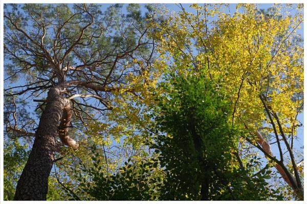 Autumnal Gleam Series #96 by PentaxBro
