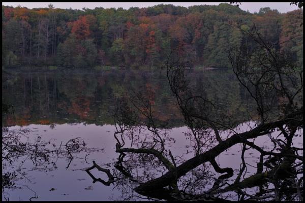 Autumnal Gleam Series #24 by PentaxBro