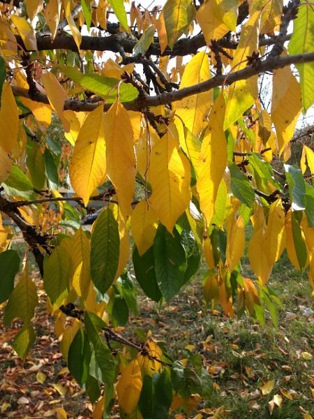 Autumn by viktorinax