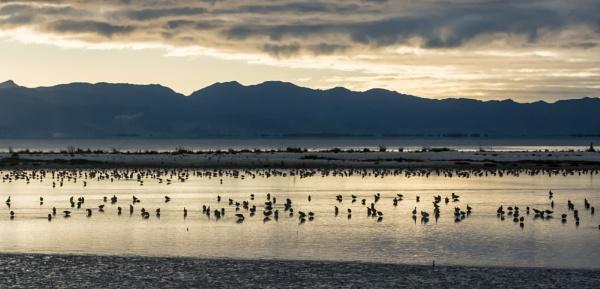 Dawn - Miranda Bird Sanctuary by barryyoungnz
