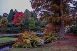 Autumn Colour No1