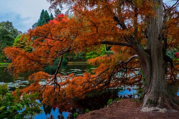 Autumn Colour No2