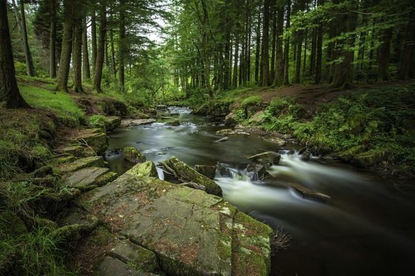 Mountain Forest Scene