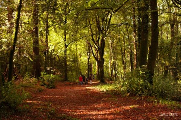 Autumn Walk by jameswburke