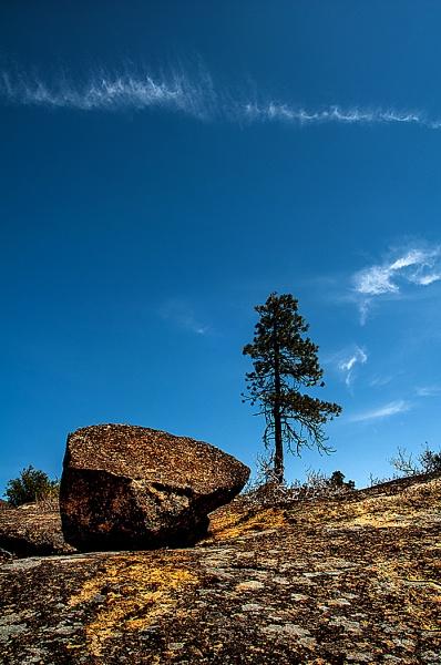 Hetch Hetchy Rock and Tree Yosemite NP by Zydeco_Joe
