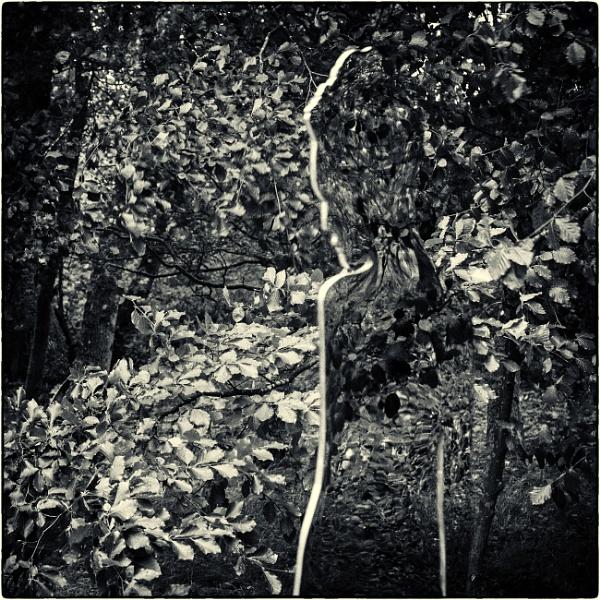 Woodland spirit by mrswoolybill