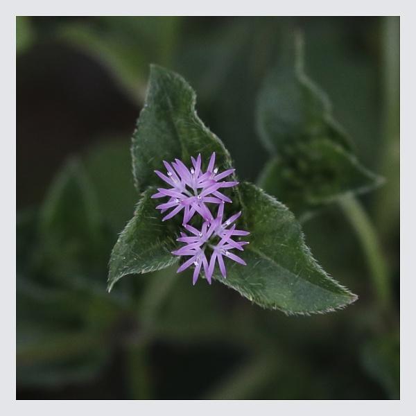 Unknown Flower by prabhusinha