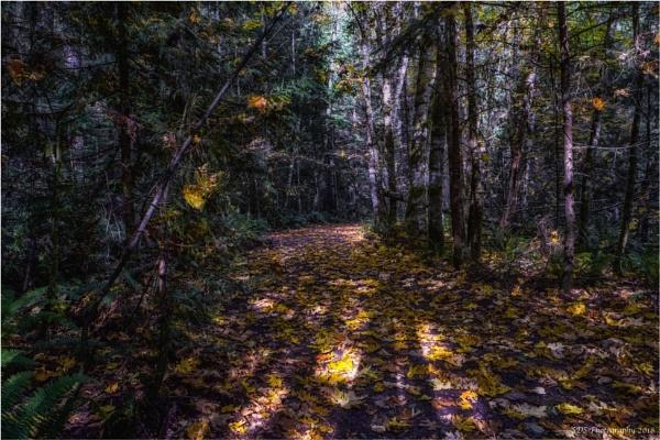 An Autumn Walk by Daisymaye
